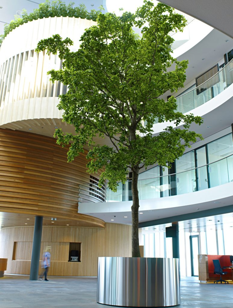 Großer Baum im Edelstahlgefäß, Haas Innengrün